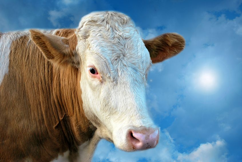 The Sacred Cow: Lack of Succession Planning | Avoid the ... |Scared Cow
